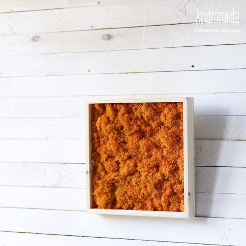 cuadro de musgo color naranja