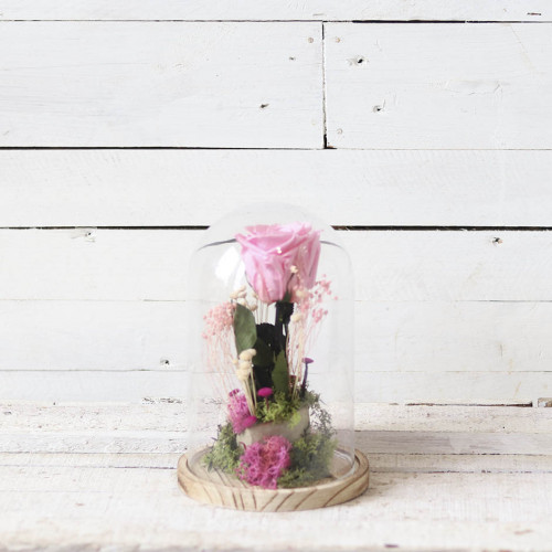 rosa rosa cupula cristal