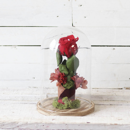 rosa roja cupula cristal