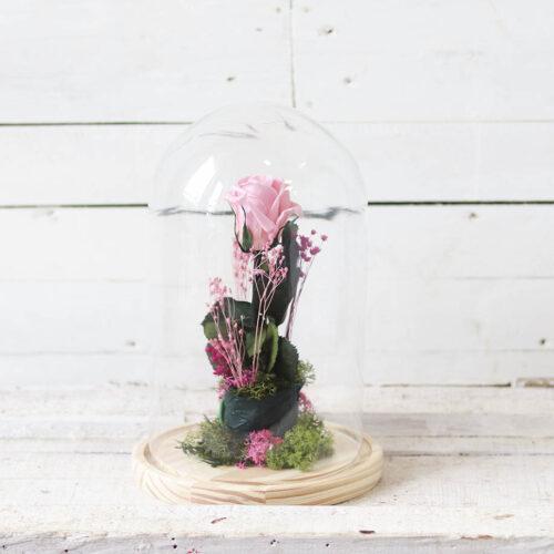 rosa rosa en cupula de cristal