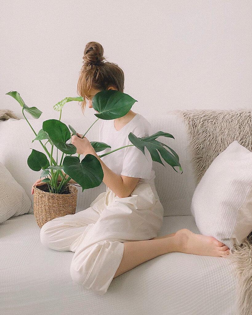 plantas antiestres